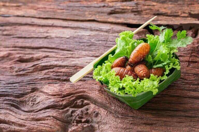 Böcek Proteini: Hayvansal Proteine Bir Alternatif Olabilir Mi?