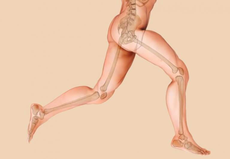 grov tegning af knoglestruktur i underkroppen