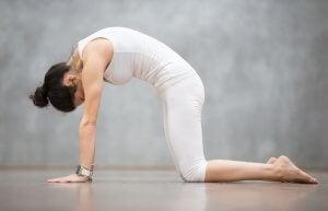 Woman doing yoga. Cat pose.