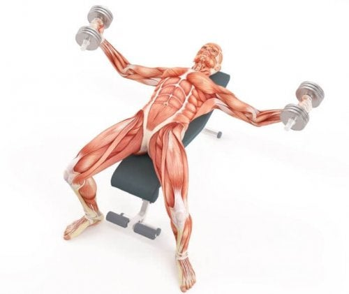 Exercises for swimmers chest press