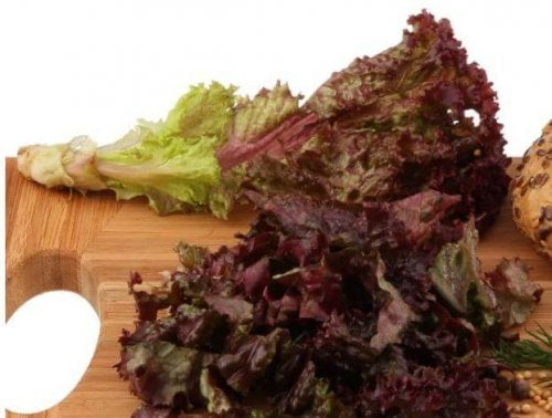 The red coral lettuce is bitter and delicious