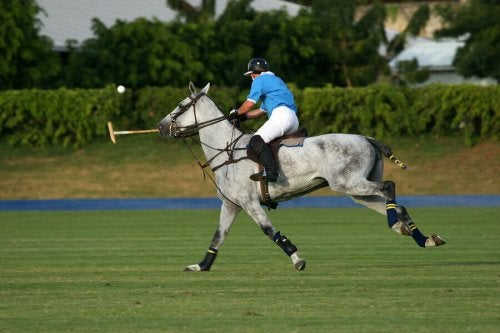 All You Need to Know About the Sport of Polo