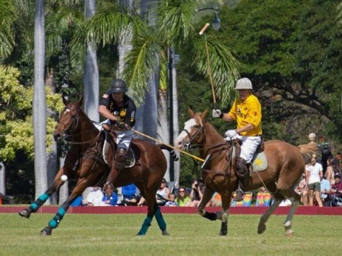 Two polo players engaging in a game as described in the text