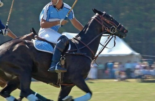 A man on a horse playing polo and described in the text