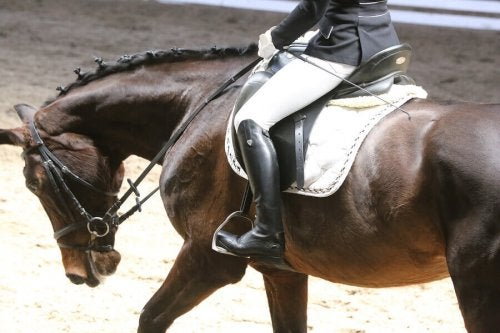 Legal Aspects of Horse Co-Ownership for Competitions