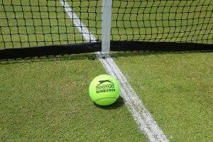 A tennis ball on a grass court.