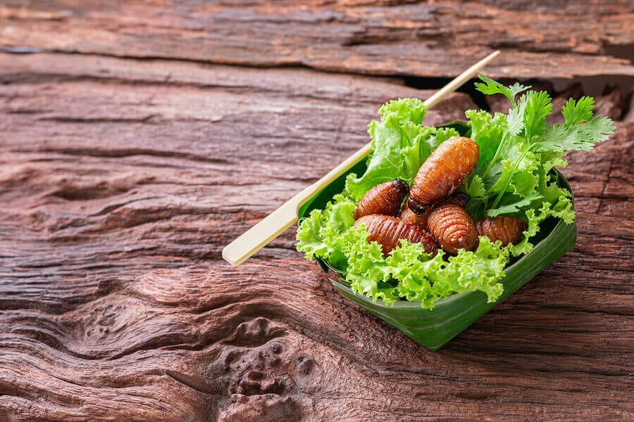 Insect Protein: An Alternative to Animal Protein?